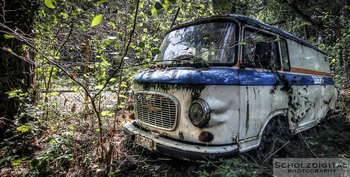 Iron_Forest8.jpg