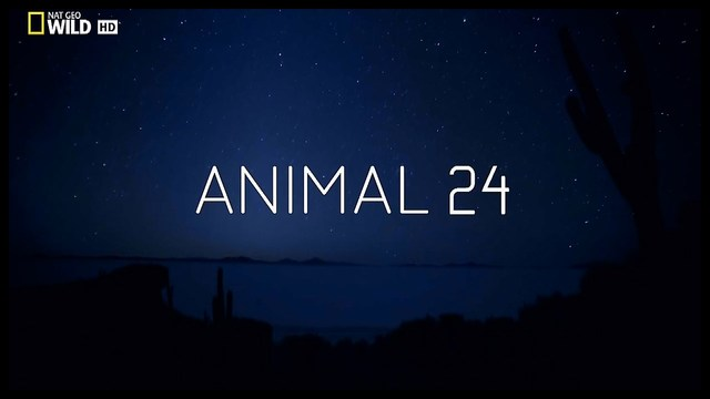 Animal.24.jpg